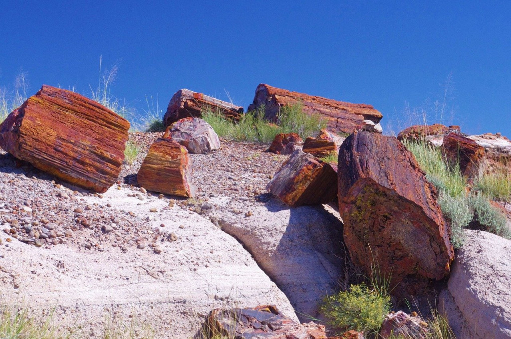 petrified-forest-national-park-3580374_1280